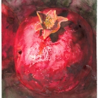 Early pomegranate - Gay Bilson project