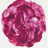 12 Rose Mandala for the Time of Covid arches  paper 1540cms x 1020 cms